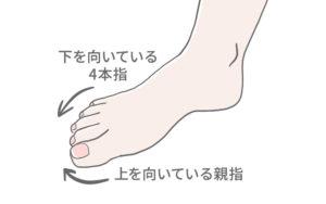 足の指についてのイラスト