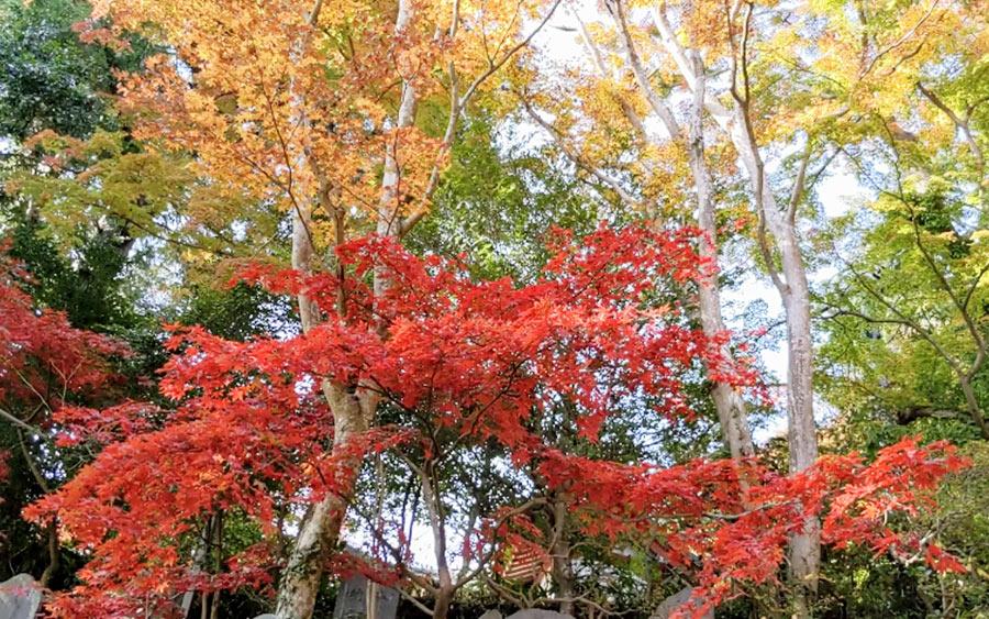 薬王院の紅葉