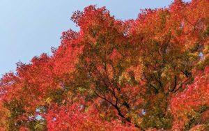 薬王院の中の紅葉