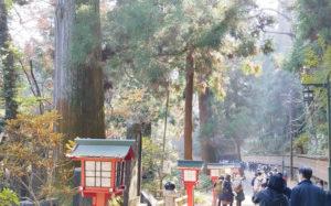 1号路の杉並木