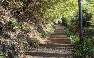 金比羅台までの階段の道